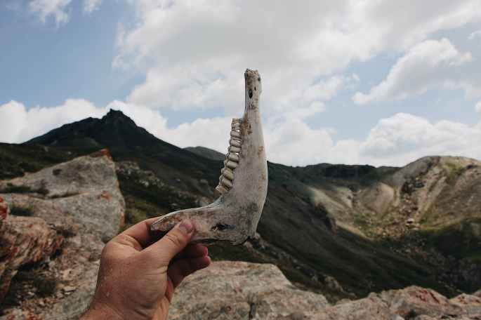 person holding up a jaw bone with teeth remains of an animal