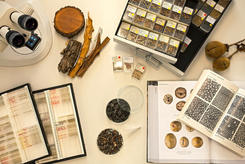 Tools-of-an-archaeobotanist-clockwise-Dissecting-microscope-wood-collection-fruit.png